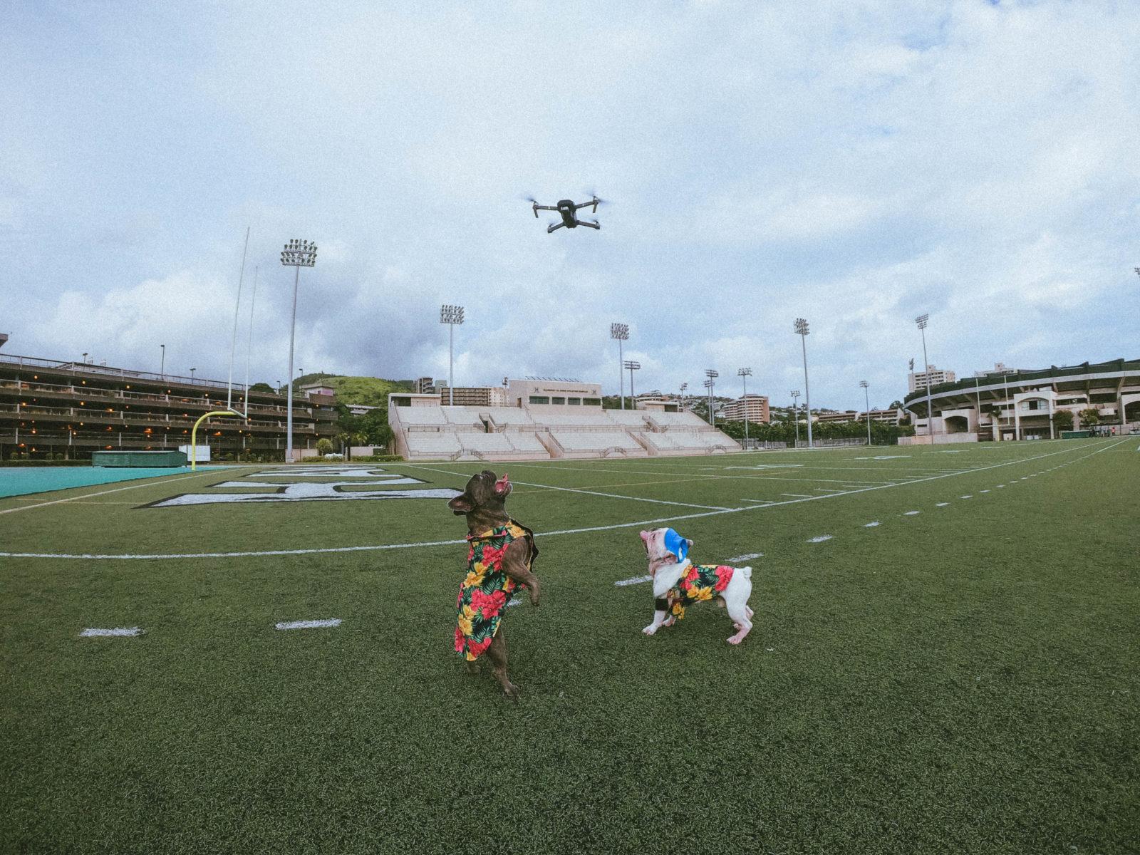 Majitel psa venčí svého  miláčka pomocí dronu