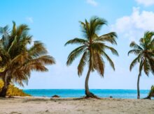 green palm tree near sea during daytime