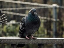 black and green bird on brown wooden fence during daytime
